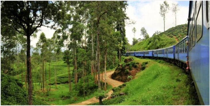 Enjoy the bustling nature past the window on the train